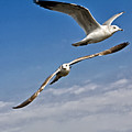 Birds On The Wing by Tim Wilson