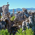 Birds On Tufa Towers-mono Lake by Bruce Chevillat