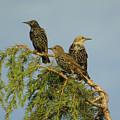 Birds-on-watch by Gordon Auld