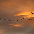 Birds Over San Miguel De Allende by John  Kolenberg