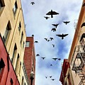 Birds Overhead by Julie Gebhardt