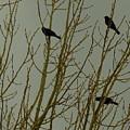 Birds by Patrick  Short