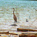 Birds Reflections by Christine Townsend