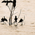Birds by Rubina Goel
