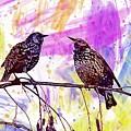Birds Stare Nature Songbird  by PixBreak Art