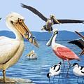 Birds With Strange Beaks by R B Davis