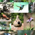 Birdsong Nature Center Collage by Carol Groenen