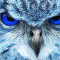 Birdwatch Blue Owl by Jim Lott