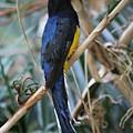 Birdy by Katherine Ruth
