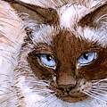Birman Cat - Blue Eyes. by Svetlana Ledneva-Schukina