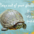 Birthday Card - Painted Turtle by Mother Nature