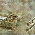 Birthday Greeting Card - White-throated Sparrow Songbird by Mother Nature