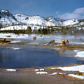 Biscuit Basin Elk Herd by Ed  Riche