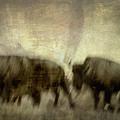 Bison 3 by Joye Ardyn Durham