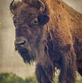 Bison 8 by Joye Ardyn Durham