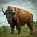 Bison 9 by Joye Ardyn Durham