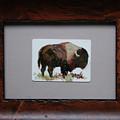 Bison by Betty Jean Billups