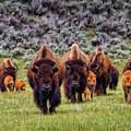 Bison-dwp15818953 by Dean Wittle