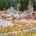 Bison Grazing Amid Hot Springs And Geysers Yellowstone National Park by NaturesPix