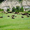 Bison Herd II by Beth Collins