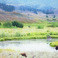 Bison In The Meadow by Carolyn Fox