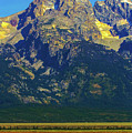 Bison In The Tetons by Jeff Kurtz