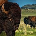 Bison On The Plain by Paul W Sharpe Aka Wizard of Wonders