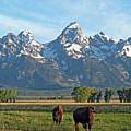Bison Range by Scott Mahon