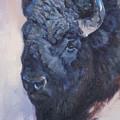 Bison Study by JQ Licensing