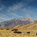 Bison The National Mammal by Mark Kiver