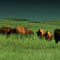 Bisons In The Prarie by Iris Greenwell