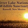 Bitter Lake National Wildlife Refuge Birds, Roswell, New Mexico by Glen Matthew Laughton