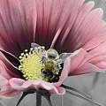 Bizzybee by Janice Bajek