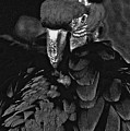 Black And White Bad Ass Bird by David Frederick