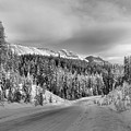 Black And White Bow Valley Parkway - Winter by Adam Jewell