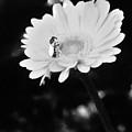 Please Remember I Am A Bee On A Flower by Debra Lynch