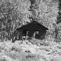Black And White Cabin by Pat Turner