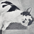 Black And White Cat Lounging by Phyllis Tarlow
