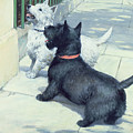 Black And White Dogs by Septimus Edwin Scott