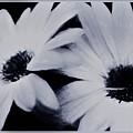 Black And White Floral Art by Debra Lynch