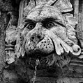 Black And White Lion Fountain On Dubrovnik Stradun, Dubrovnik, Croatia by Global Light Photography - Nicole Leffer