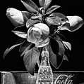 Black And White Magnolia And Coke Still Life by JC Findley