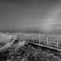 Black And White Misty Morning October by Leif Sohlman