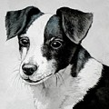 Black And White Mutt Dog by Christopher Shellhammer
