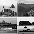 Black And White Olympic National Park Collage by Dan Sproul