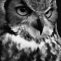 Black And White Owl Painting by Gull G