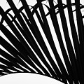 Black And White Palm Branch by Christopher Johnson
