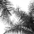 Black And White Palm Trees by Wall Threads