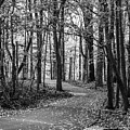 Black And White Path In Autumn  by John McGraw