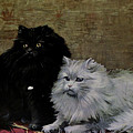 Black And White Persians by W Luker Junior